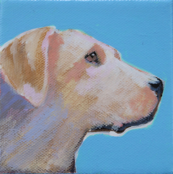 SOLD - MINI Fall Sky Blue Yellow Lab #1- 4 x 4