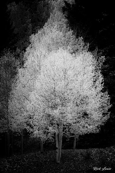 Aspen Illuminated
