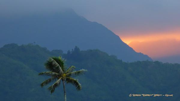 A Long Palm Tree and Sundown Pinks