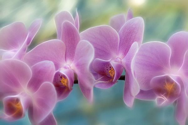 electric orchids, orchids, electric, botanical flowers, purple and yellow orchid stems, art photographs of flowers,