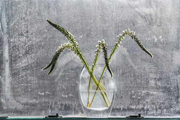 weeds, stems of flowers, flower vase, water vase, dirty window, window art, photographs of weeds,