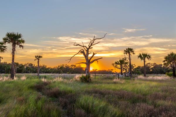 Ossabaw Island Sunset