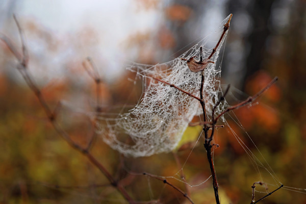 Spider Web in Fall