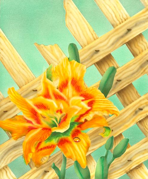 Raindrop Lily print by Sue Zabel.
