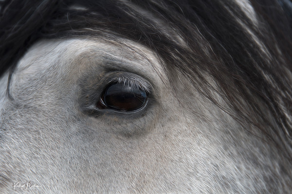 Eye of the Horse 2