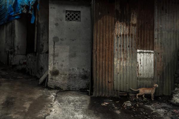 mumbai alley cat