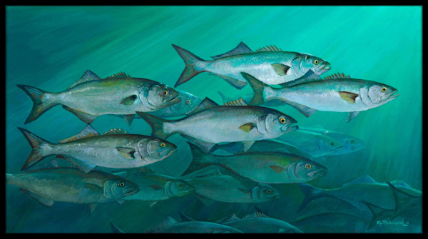 Bluefish with Black Border