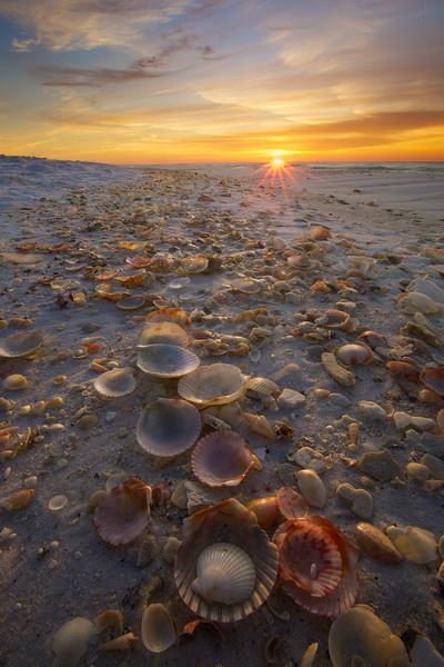 Shells, shells, and more shells!