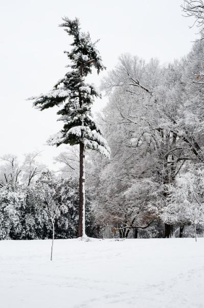 East Campus Tree