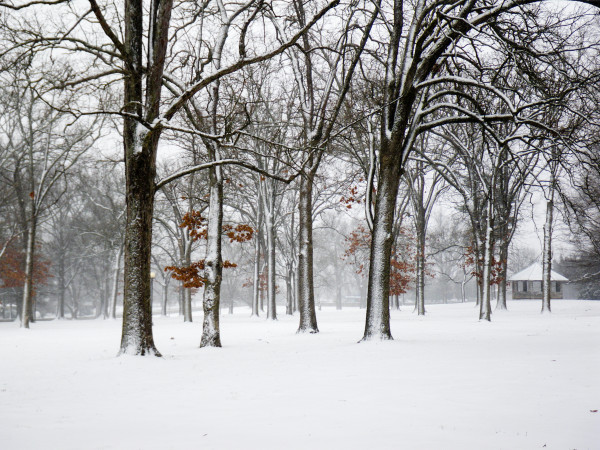 Snow on East Campus 2