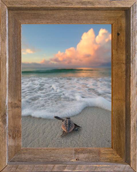 """SEA-Ya! (9"""" x 12"""" Framed Canvas Board)"""