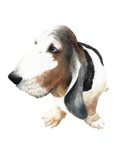 Realistic and Expressive Pet Portrait Art - Watercolor Paintings