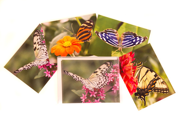 Butterfly Collection Notecards