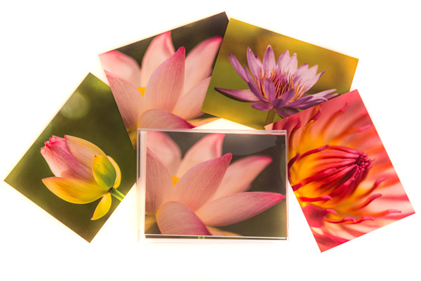 Lotus and Water Lilies Notecard Collection
