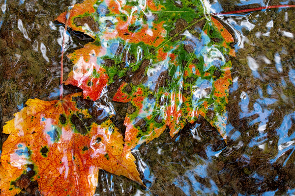 fall leaves, four seasons, seasonal weather, water reflections, photographs of leaves and water,