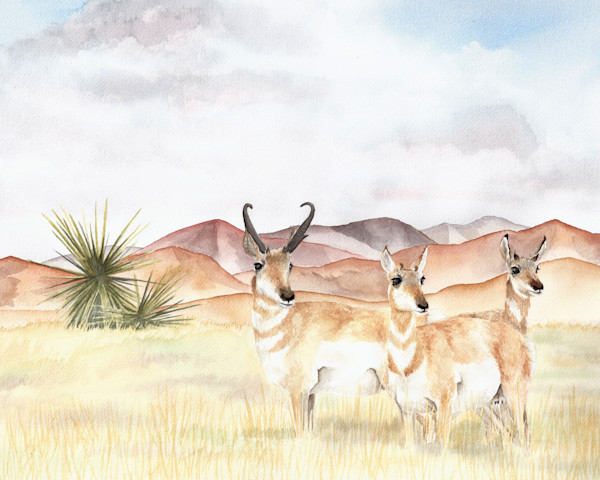 Pronghorns Original Watercolor Painting