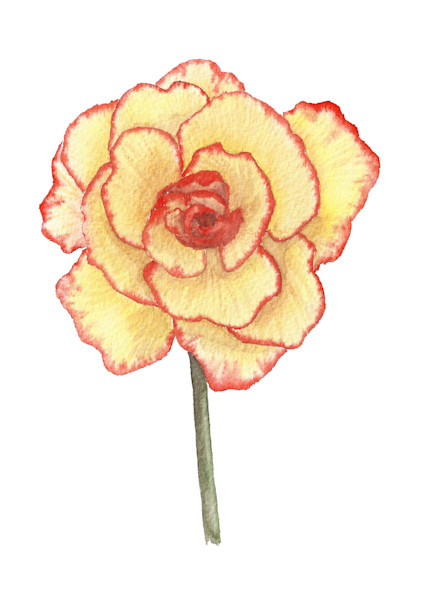 Begonia Original Watercolor Painting