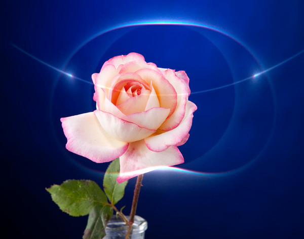 Romance Pink Rose 2769.02