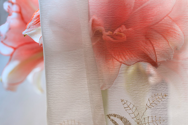 studio photographs of Amaryllis flowers, red Amaryllis photographs, art photography of red flowers of Amaryllis,