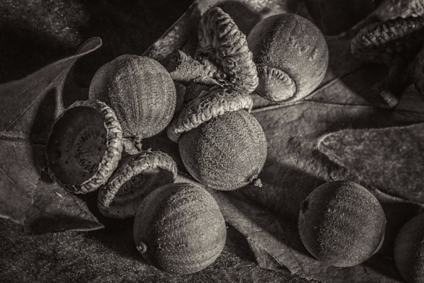 Nuts Art Photographs for Metal Wall Art, Canvas prints, and Paper
