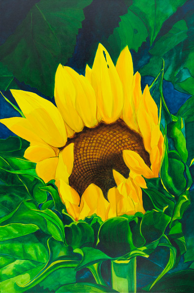 Blooming Sunflower by John Van Sickel | Kansas Art Gallery