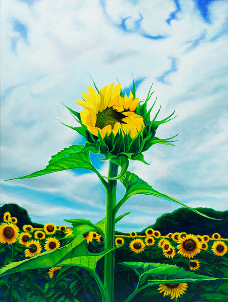 Grinter Sunflower Booming by John Van Sickel | Kansas Art Gallery