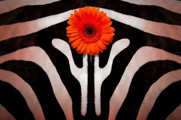 abstract photograph, art photographs of flowers and animals, colorful and patterned art of flowers and animals,