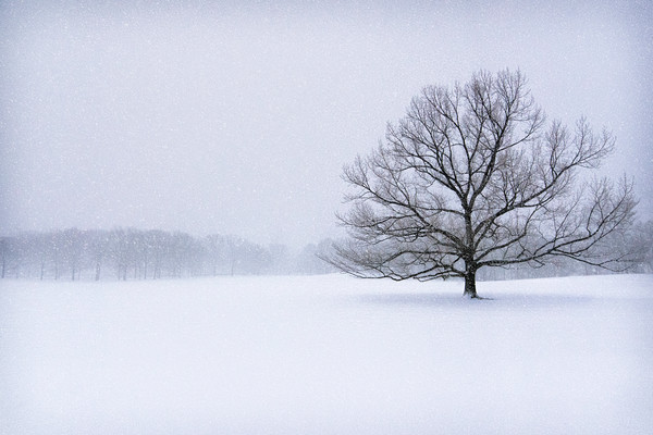 winter scenes and landscapes, winter landscapes of central park, snow blizzards and scenes,