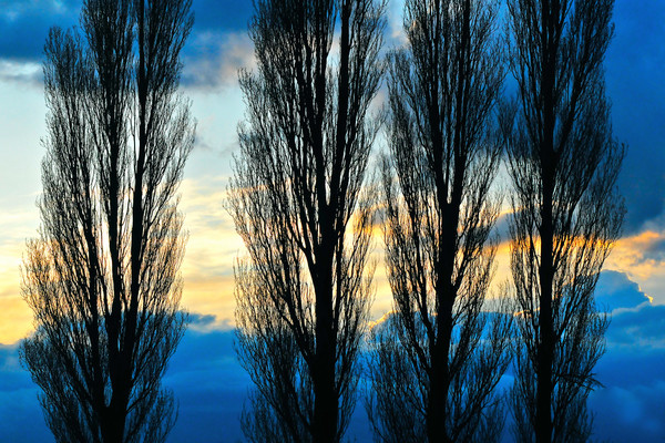 Stansted London, tree lined driveways in London, art photographs of Italian Cypress trees,