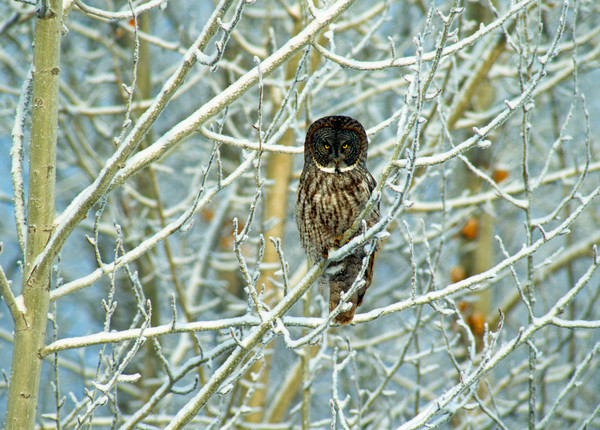 Wildlife photos, wild bird photos, bird photos, bird photography, bird art work, birder photos, birder artwork