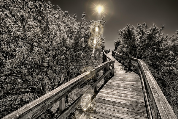 boardwalks and wooden pathways, art photographs if the Pine, Fire Islands, photography of Fire Island in Long Island,