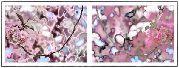 Cherry Blossom flower photography, art photographs of cherry blossom flowers, pictures of pink flowers,