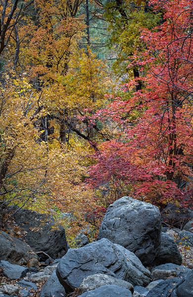 Fall on Oak Creek