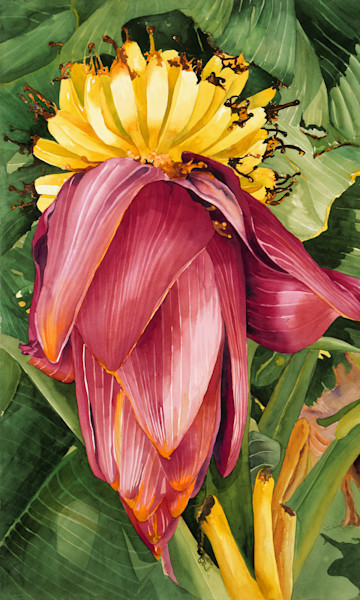 Big Bloom Bananna 24x40