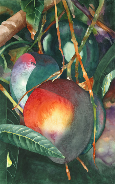 Dark Green Mangos 24x40