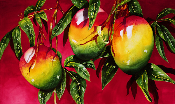 Red Back Mangos 24x40