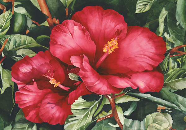 Two Hibiscus 28x40