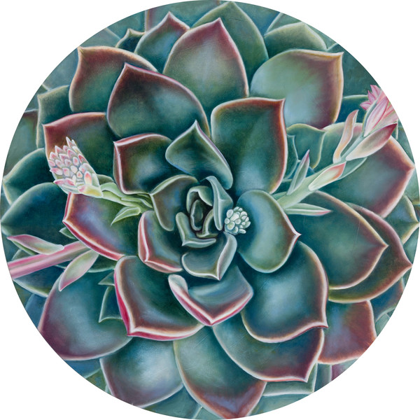 """Bloom In The Desert II"" by Ilse Kleyn 