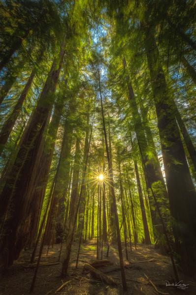 Redwood Sunset Photographic Art