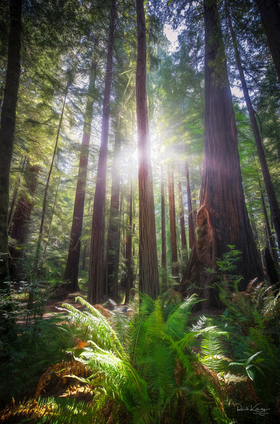 The Shaman of the Redwoods Photographic Art