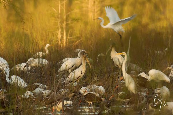 Constance Mier Photography - bird gallery