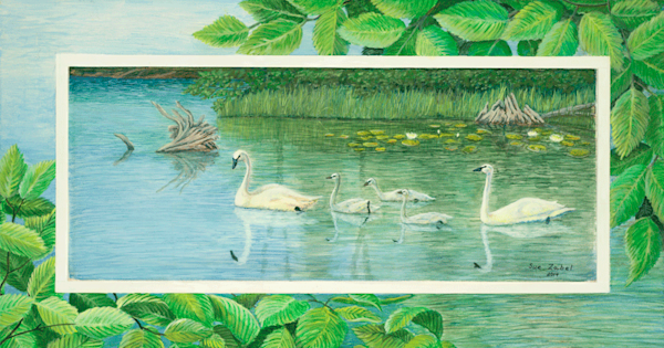 Chute Pond Swans fine art print by Sue Zabel.