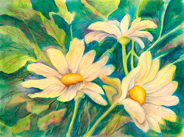 Daisy a Day fine art print by Gayle Brunner.