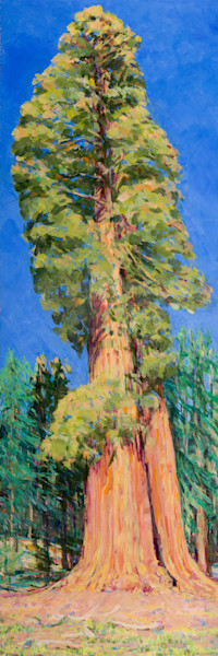 Clara Barton Tree on Big Trees Trail in the heart of Sequoia National Park