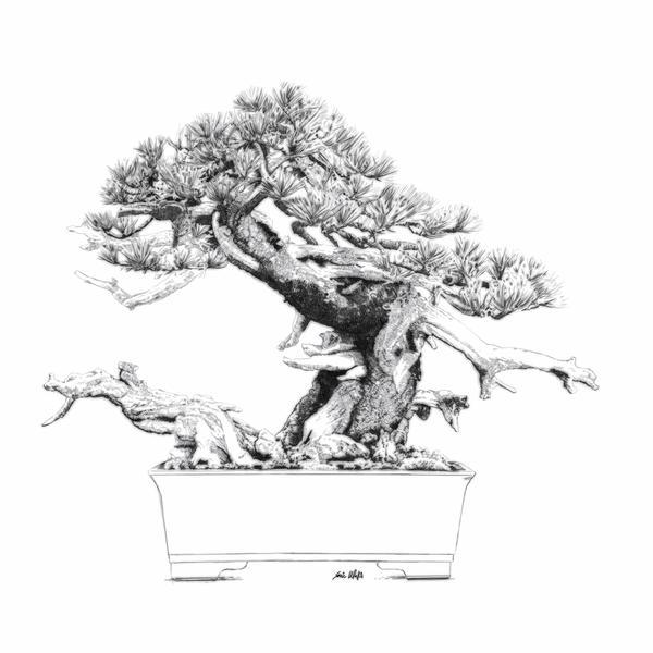"Digital etching by Eric Wallis titled ""Bonsai One."""