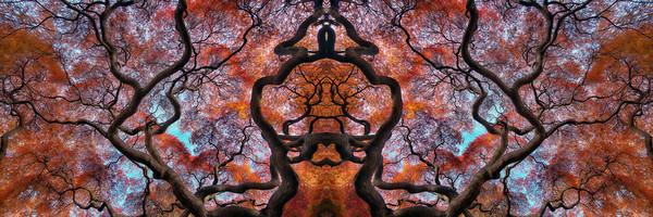 art photographs of Japanese Maple trees, abstract art photographs, photographs of fall orange leaves,