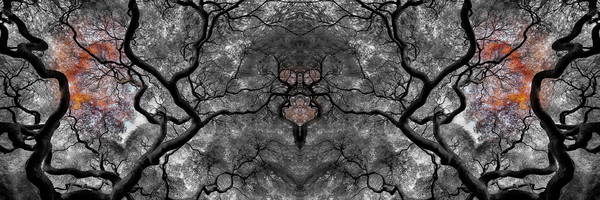 black and white photography, art photographs of black and white nature prints, Japanese Maple trees,