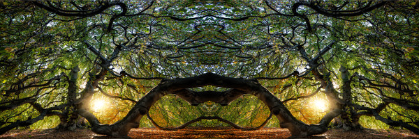 kaleidoscopes and abstract images, Cypress trees, hundred year old trees,