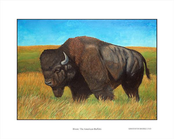 Bison the american buffalo fine art print by Kristofer Bjorklund.