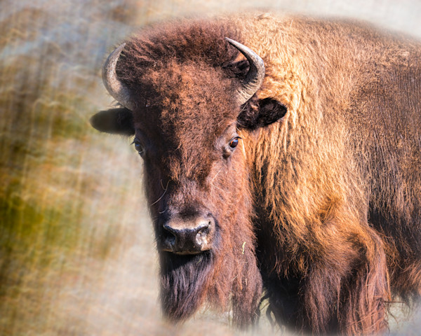 Western Art, Buffalo